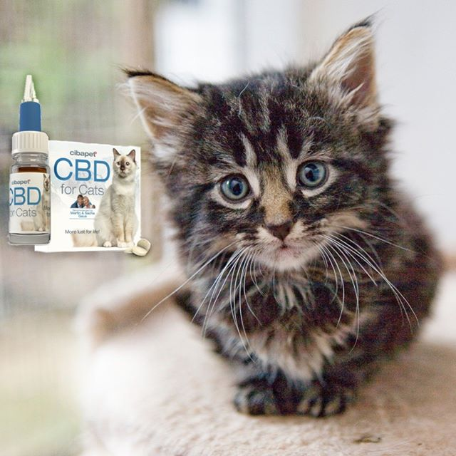 Boost your feline friend's health with CBD for