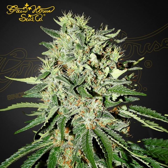 Call The Doctor! This indica produces sticky buds