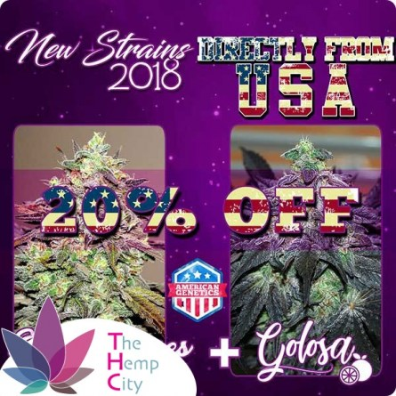 New Strains Pack - Golosa + Eleven Roses